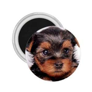 Yorkshire Terrier Puppy Dog 8 2.25in Magnet R0655