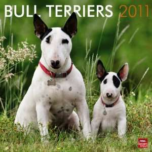 Bull Terriers 2011 Wall Calendar 12 X 12 Office